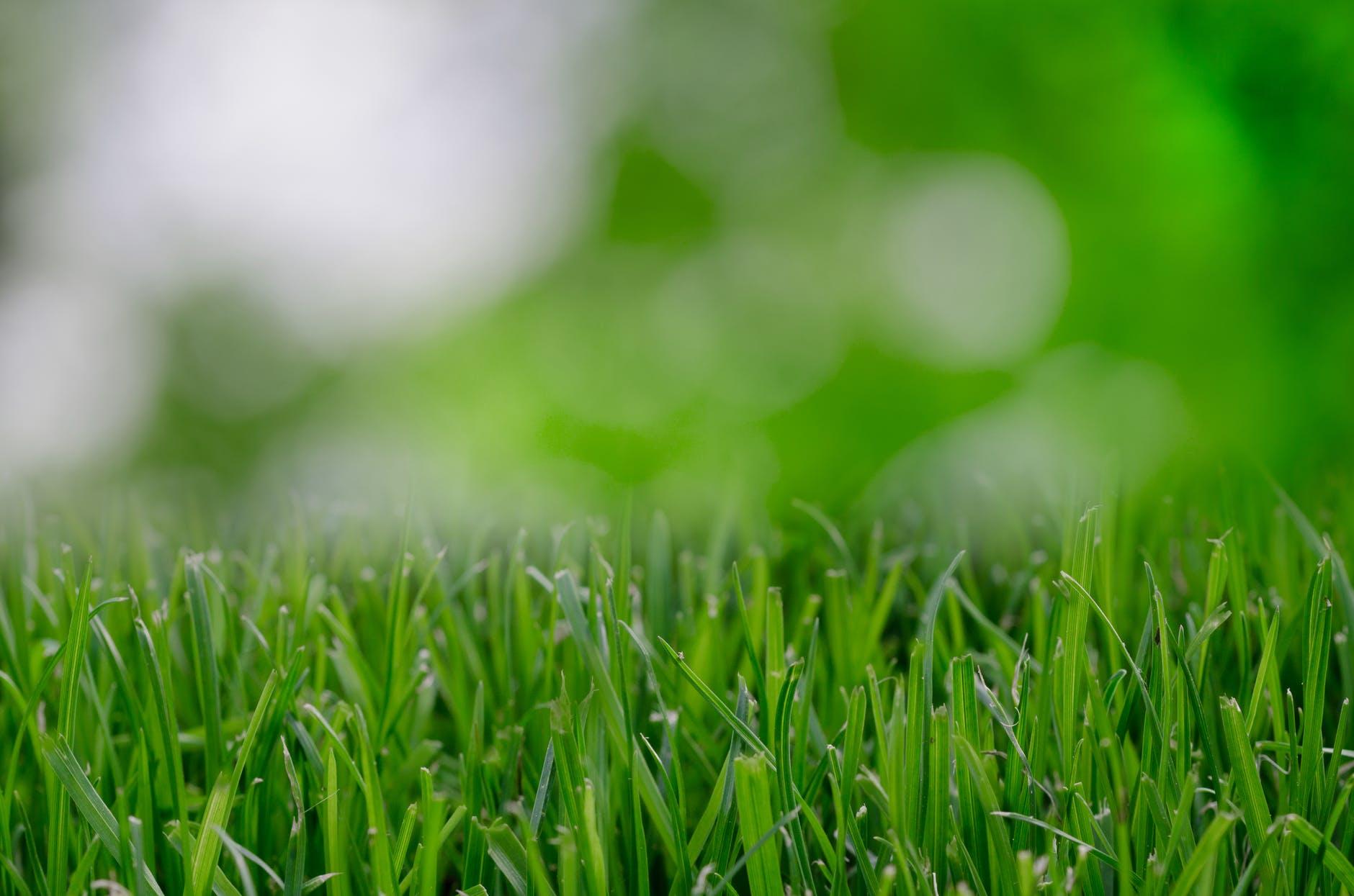 Gras maaien of laten groeien door uitstelgedrag of procrastinatie