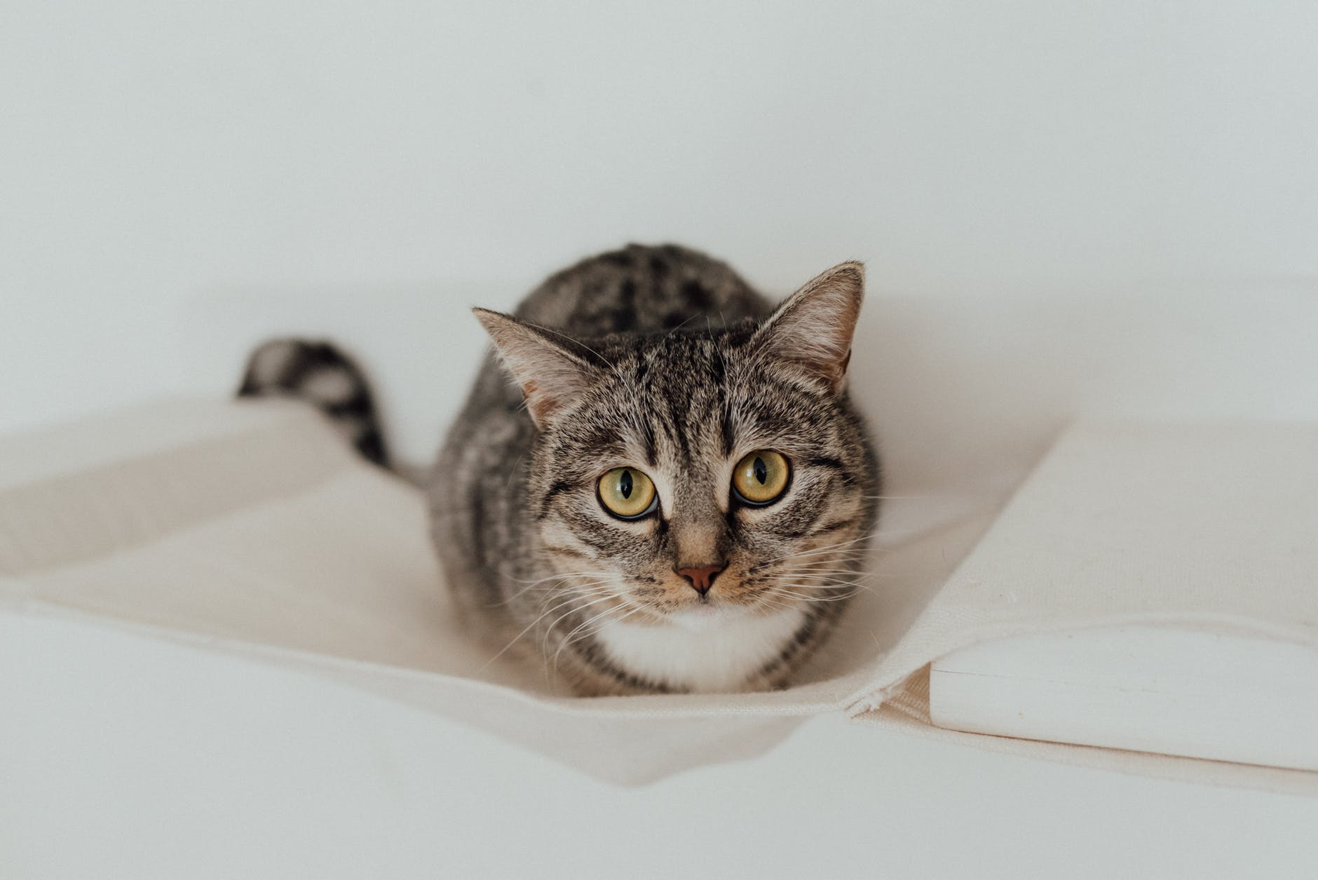 Geluk tips kat kitten foto